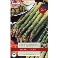 Asparagus Connovers Colossal - 3 crowns