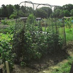 Gardman Walk-in Crop Cage