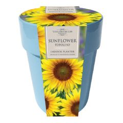 Indoor Sunflower Ceramic Pot Set