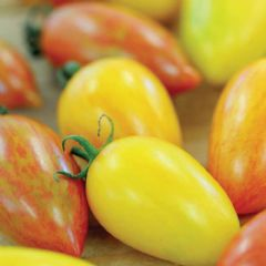 Fruit Seeds Tomato Artisan Mix - 8 Seeds