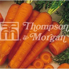 Vegetable Seeds - Carrot Fly Away F1 Hybrid