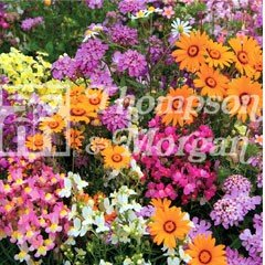 Flower Seeds - Annuals Fairy Mixed