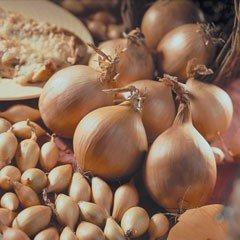 Autumn Bulbs - Onion Set - Radar (Pack of 50)