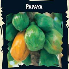World Garden Seeds - Papaya