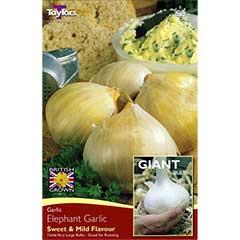 Autumn Bulbs - Elephant Garlic - 2 cloves