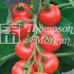 Fruit Seeds - Tomato Matina