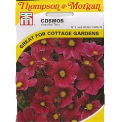 Flower Seeds - Cosmos Versailles Tetra