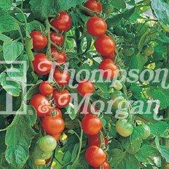 Fruit Seeds - Tomato Gardeners Delight
