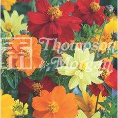 Flower Seeds - Cosmos Brightness Mixed