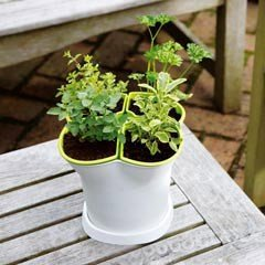 Self Watering Herb Pot- 4 Segments