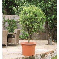 Cilindro Planter - 70cm