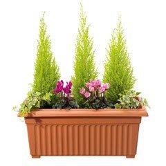 Corinthian Trough Planter - 70cm
