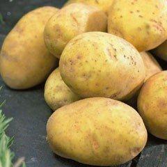 First Early Seed Potatoes - Duke of York