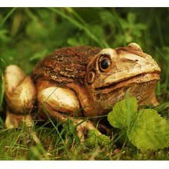 Woodland Friends... Frog