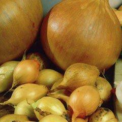 Autumn Bulbs - Troy Onion Set - 50 bulbs