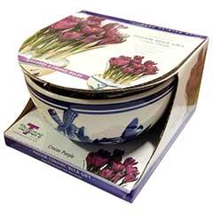 Autumn Bulbs - Delft Bowl - Purple Crocus 9 Bulbs