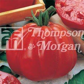 Taste of Italy Seeds - Tomato Cuore di Bue