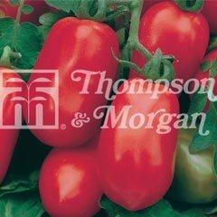 Taste of Italy Seeds - Tomato Pomodoro Roma Nano