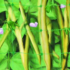 Pea and Bean Net 10m x 2m