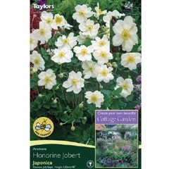 Spring Bulbs - Anemone Japonica Honorine Jobert 1 Pack