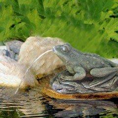 Bermuda Frog Spitter