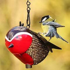 Chapelwood Fun Bird Feeder - Robin