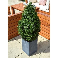 Artificial Outdoor Buxus Spiral Tree 120cm