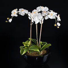 Artificial Contemporary White Orchid Plant in Black Planter