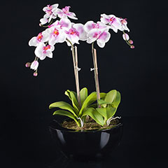 Artificial Contemporary Pink/White Orchid Plant in Black Planter