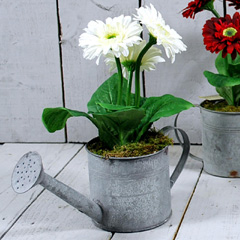 Artificial White Potted Gerbera in Watering Can