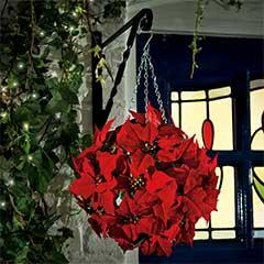 Gardman Poinsettia Topiary Ball