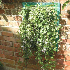 Hansons Wall Planter 41  x 70 cm