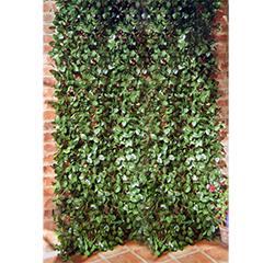 Laurel Leaf Trellis - 60 x 180cm