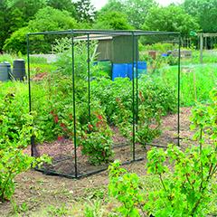 Gardman Fruit Cage - 2m x 0.8m x 1.6m