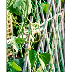 Ambassador Pea and Bean Garden Netting 10 x 2m
