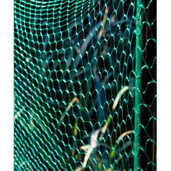 Ambassador Garden Netting 6 x 2m