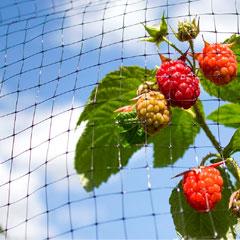 Ambassador Fruit Cage Netting 16 x 2M