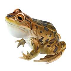 Design Toscano Leopard Frog Statue - 27cm Width