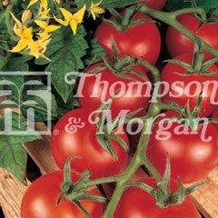 Fruit Seeds - Tomato Shirley F1 Hybrid
