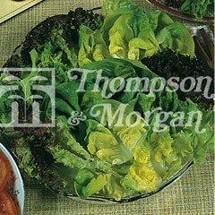 Vegetable Seeds - Lettuce Salad Leaves Mixed