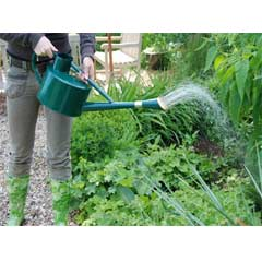Fallen Fruits Long Spout Watering Can