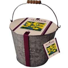 Autumn Bulbs - Zinc Flower Bucket Narcissus & Grape Hyacinth 17 Bulbs