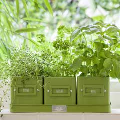Burgon & Ball Herb Pots In A Tray