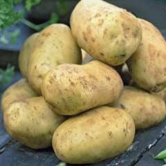 Second Early Seed Potatoes - Maris Peer 2kg