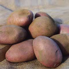 Blight Resistant Main Crop Seed Potatoes - Sarpo Axona 2kg