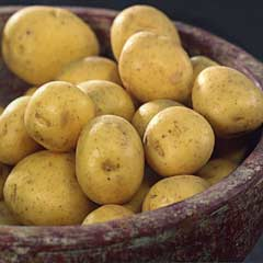 Main Crop Special Taster Pack Seed Potatoes - Mayan Gold