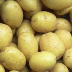 Organic First Early Special Taster Pack Seed Potato - Maris Bard