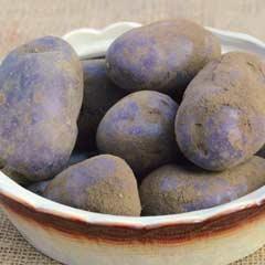 Blight Resistant Taster Pack Seed Potatoes - Blue Danube