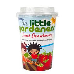 Johnsons Little Gardeners Starter Pot - Sweet Strawberries
