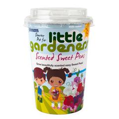 Johnsons Little Gardeners Starter Pot - Scented Sweet Peas
